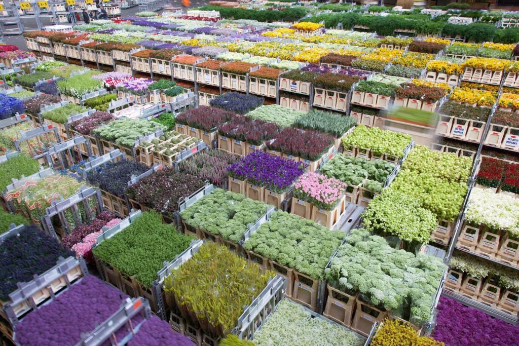 Заказывали букет, оптовые поставщики живых цветов ростов-на-дону